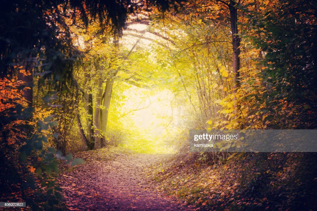 Magical Path In Autumn Park : Stock Photo