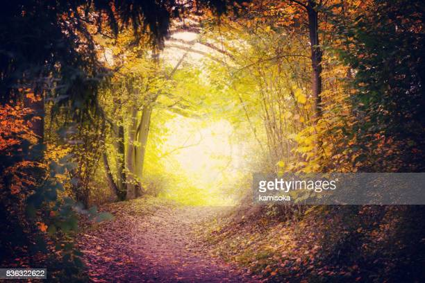 magical path in autumn park - mystery stock pictures, royalty-free photos & images