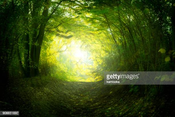magical path in summer - mystery stock pictures, royalty-free photos & images