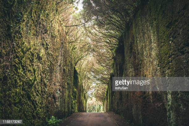 magical road surrounded by trees - tenerife stock pictures, royalty-free photos & images