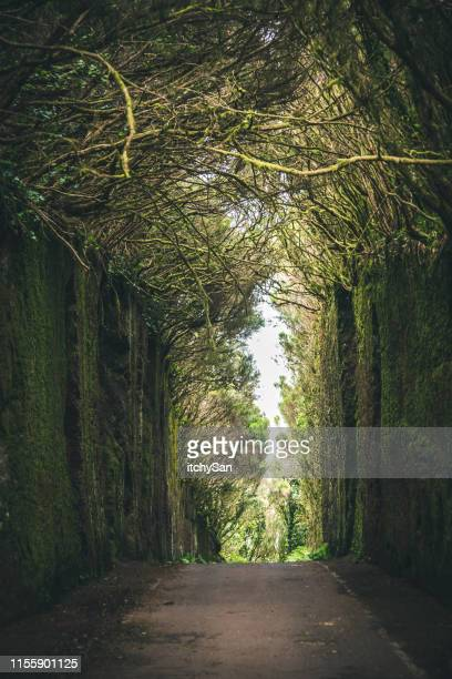 magical road surrounded by trees - narrow stock pictures, royalty-free photos & images