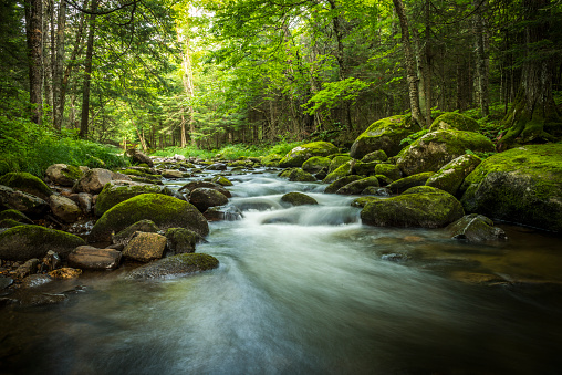 Magical stream in the heart of the green forest 484866870