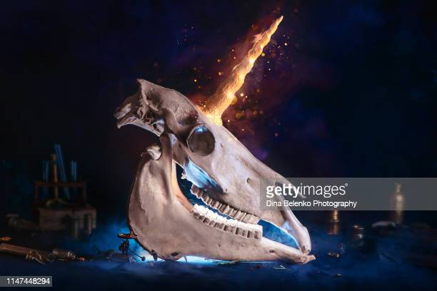 magical unicorn skull with a shining horn. creative magical archeology and bestiary concept. cryptozoology still life. - horned stock pictures, royalty-free photos & images