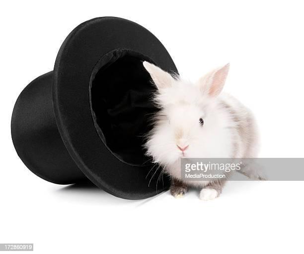 magician's rabbit