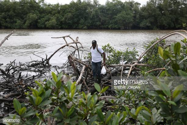 MagloireDesire Mounganga an expert from Gabon's National Agency for National Parks walks over mangroves in the Angondje Nton district of Libreville...