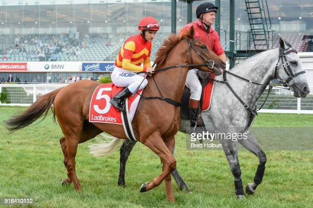Magnesium Rose ridden by Luke Currie head to the barrier before the Kevin Hayes Stakes at Caulfield Racecourse on February 10 2018 in Caulfield...