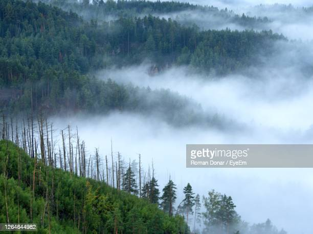 magnificent heavy mist in landscape. autumn creamy fog in countryside. hill increased from blue fog - named animal ストックフォトと画像