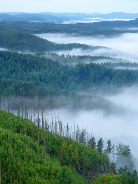 Magnificent Heavy Mist In Landscape. Autumn Creamy Fog In Countryside. The Fog Is Colored To Blue