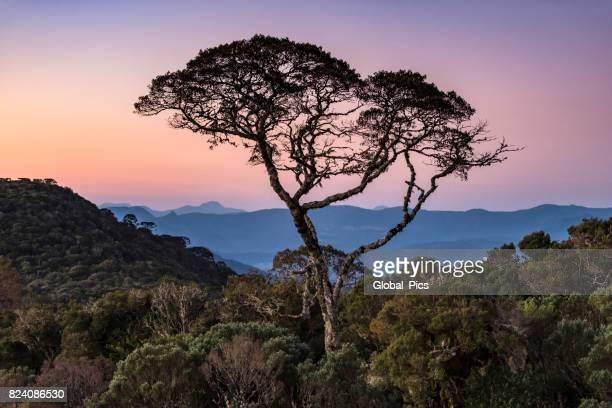 Magnificent sunset (Serra Catarinense - Brazil)