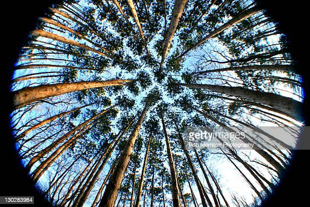 "magnificient pines"" trail in kalamazoo - kalamazoo stock pictures, royalty-free photos & images"
