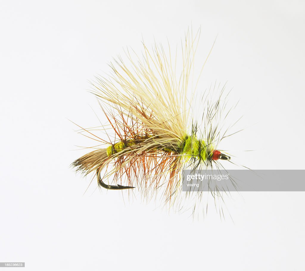 Magnified Dry Fly : Stock Photo
