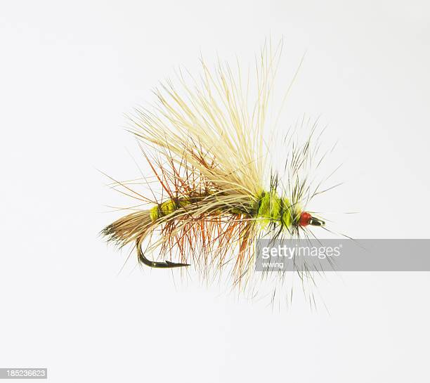 magnified dry fly - fly casting stock pictures, royalty-free photos & images