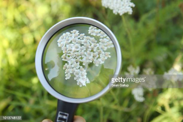 A magnifying glass held by a worker from NABU Germany's biggest NGO for conservation and the study of nature shows flowers during an inspection of an...