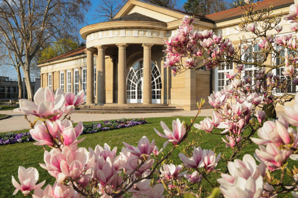 Magnolia blossom at Kurhaus, Bad Cannstatt, Stuttgart, Baden-Wurttemberg, Germany, Europe