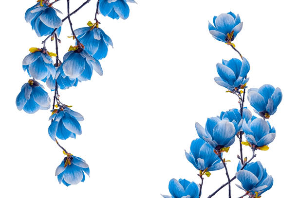 Free Blue Flowers Images Pictures And Royalty Free Stock Photos