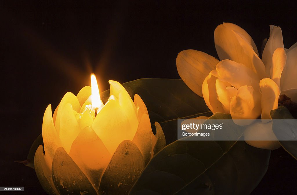 Magnolia By Candlelight : Stock Photo