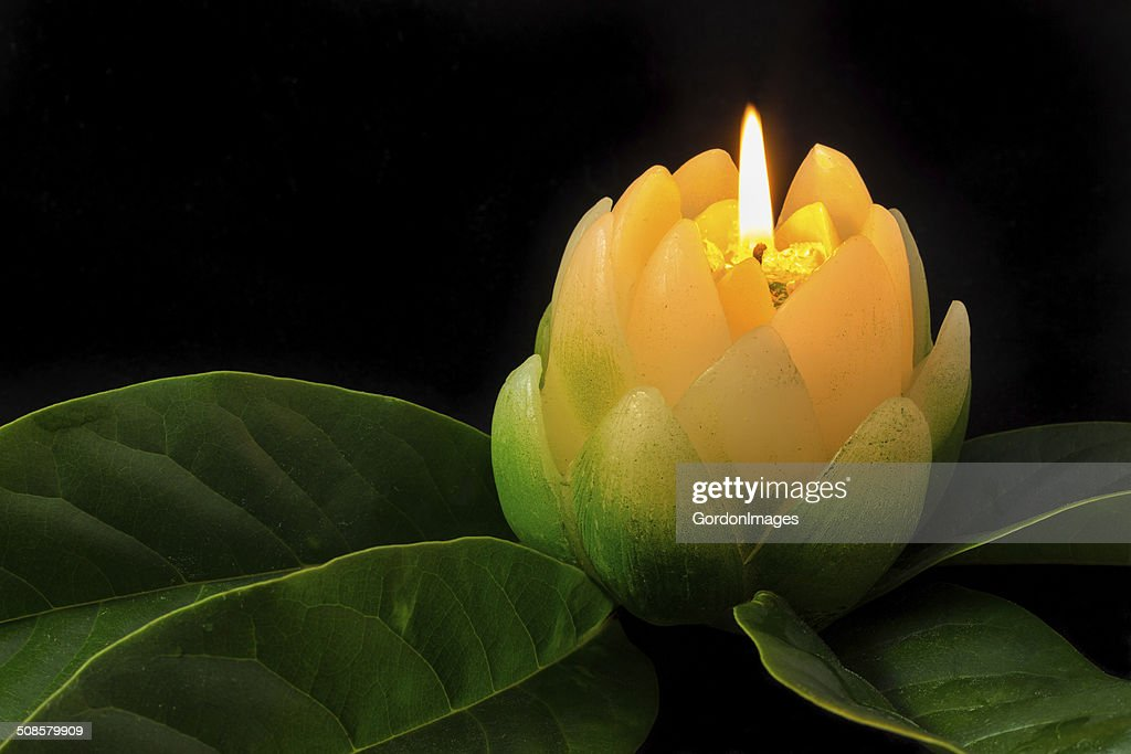 Magnolia Candle Flower : Stockfoto