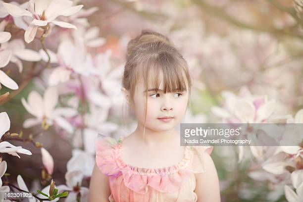 magnolia - weybridge stock photos and pictures