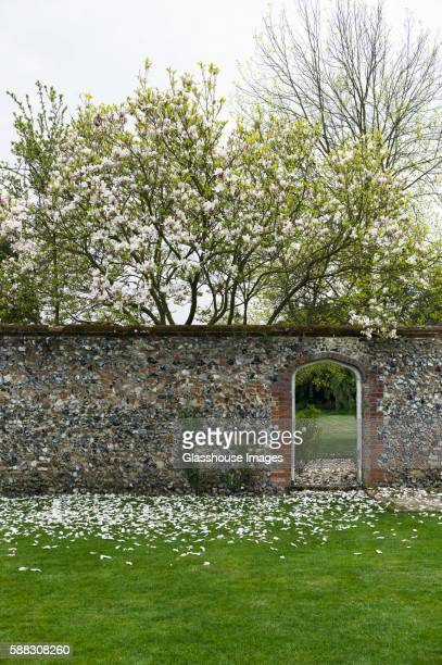 Magnolia Tree Petals on Green Lawn with Stone Wall and Open Doorway To Garden
