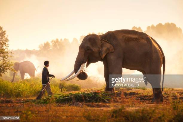 Mahout and elephant in the morning