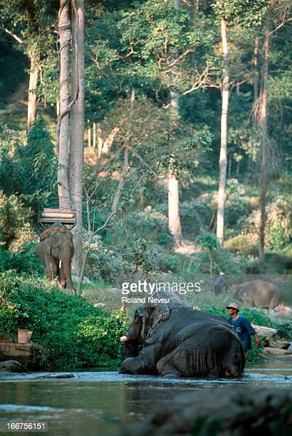 Mahout bathes his elephant at a remote camp near Chiang Mai, Thailand..