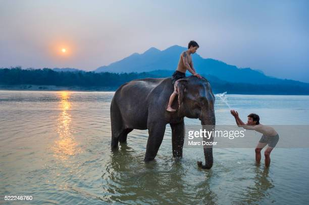 Mahout bathing his elephant in Mekong river