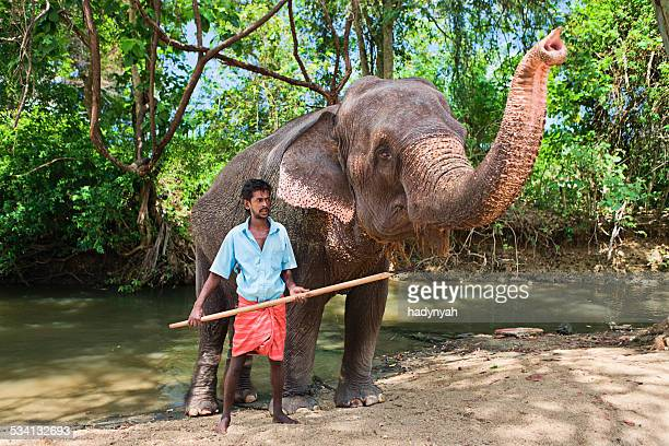 mahout bathing his elephant in the river - elephant handler stock pictures, royalty-free photos & images