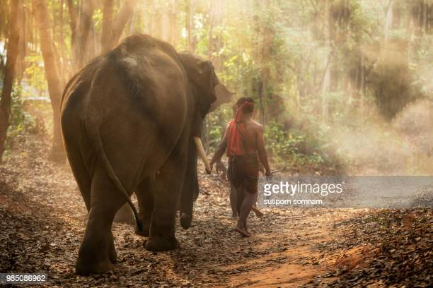mahout elephants - asian elephant stock pictures, royalty-free photos & images