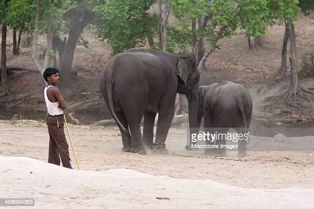 Mahout in Bandhavgarh NP, India
