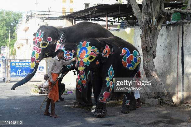 A Mahout is seen with decorated elephants on the eve of the annual Rath Yatra of Lord Jagannath festival in Ahmedabad on June 22 2020