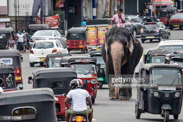 Mahout rides an elephant among the traffic down a street in Piliyandala, a suburb of Sri Lanka's capital Colombo on September 27, 2020.