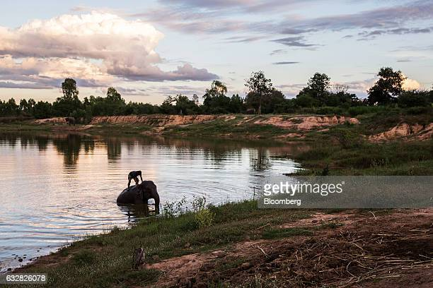 Mahout rides his elephant out of a lake at Ban Ta Klang Elephant Village, Surin province, Thailand, on Saturday, Nov. 26, 2016. Ever since the craze...
