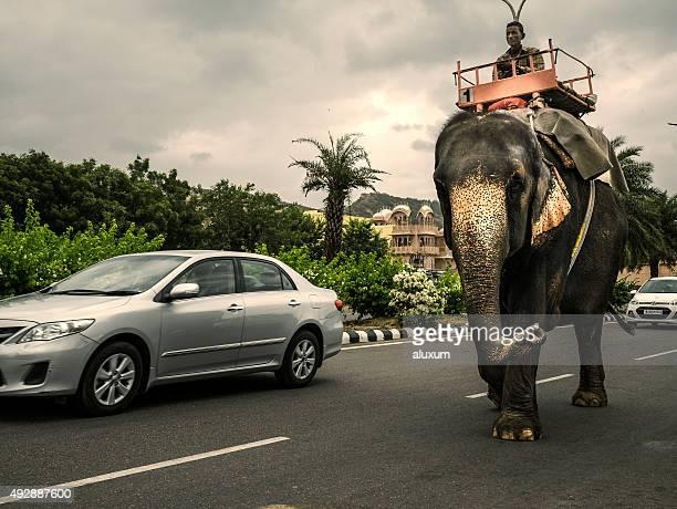 Un cornac équitation elephant à Jaipur, Rajasthan, Inde