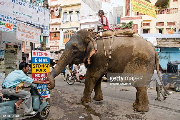 CONTENT] Mahout riding his Elephant in a street of Udaipur The mahout is the person that drives the elephant People give food or money offerings to...