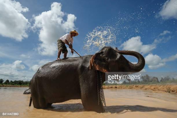 A mahout washes his elephant in a lake at Ban Ta Klang Elephant Village, Surin province, Thailand