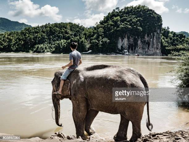 Mahout with elephant in the Mekong river Luang Prabang Laos