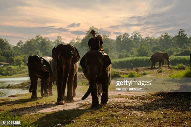 Mahouts and elephants