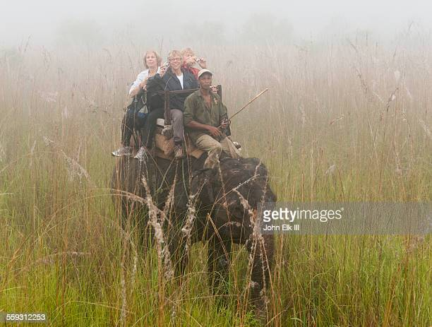 mahouts taking tourists on elephant jungle tour - chitwan stock pictures, royalty-free photos & images