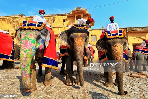 Mahouts wait for tourists to offer elephant rides at the historical Amer Fort, as they resumed their service after over 8 months' suspension due to...