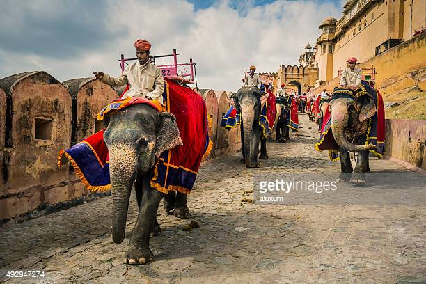 mahouts with elephants in amber fort jaipur india - indian elephant stock pictures, royalty-free photos & images