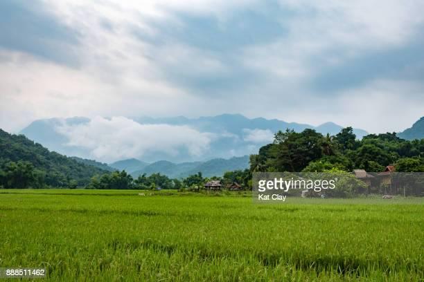 mai chau landscape - mai chau stock pictures, royalty-free photos & images