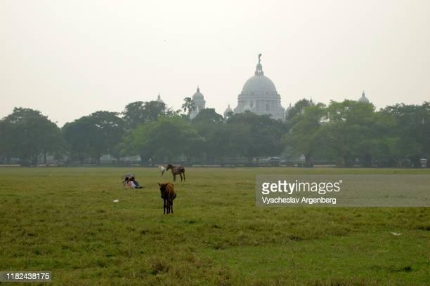 maidan lush, green grounds in kolkata, india - argenberg stock-fotos und bilder