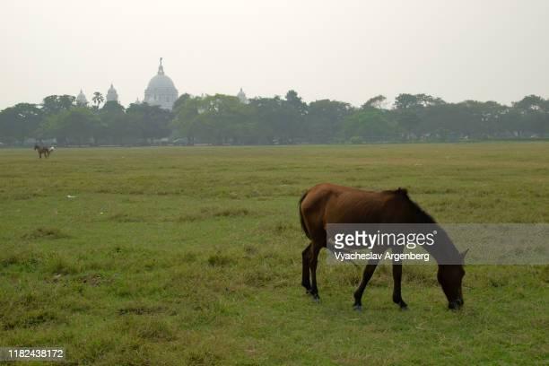 maidan open parkland in kolkata, india - argenberg - fotografias e filmes do acervo