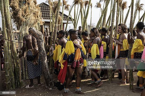 Maidens from Swaziland lay the reeds for the Queen mother palace as they sing and dance during the first day of the annual royal reed dance at the...