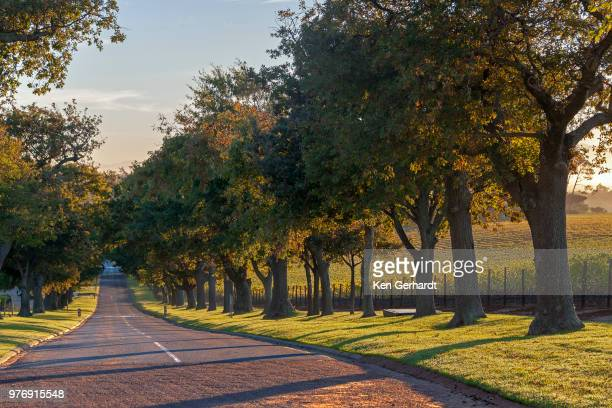 main avenue leading out of groot constantia, cape town. rsa - constantia stock pictures, royalty-free photos & images