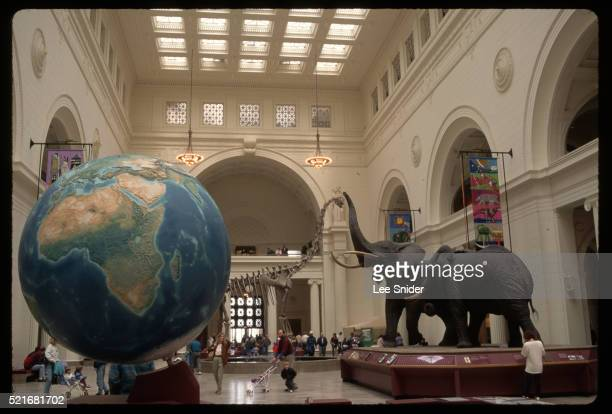main hall of field museum - field museum of natural history stock pictures, royalty-free photos & images