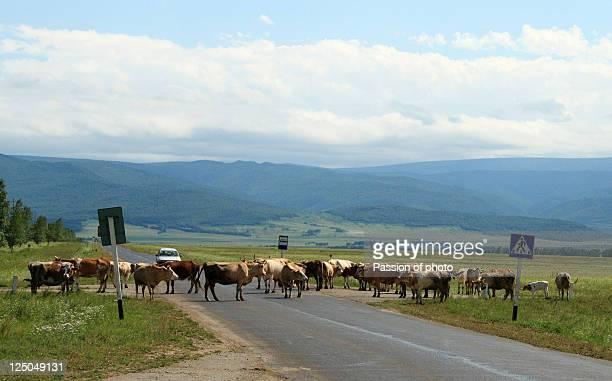 Main pedestrians in Buryatia