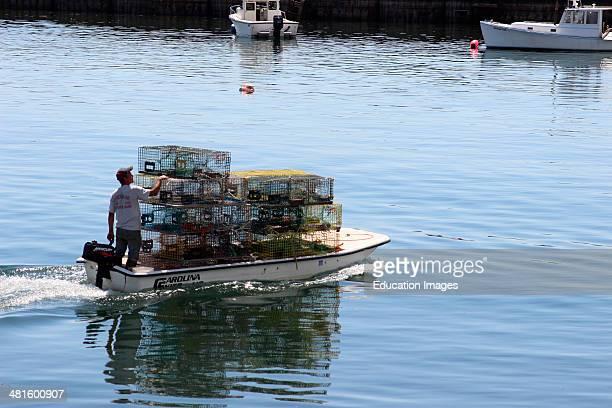 Maine Coast New England USA Jonesport lobsterman with traps on boat