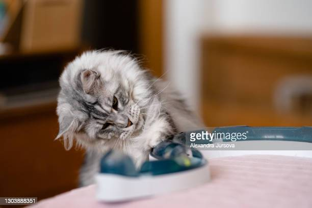 maine coon cat - malacky stock pictures, royalty-free photos & images