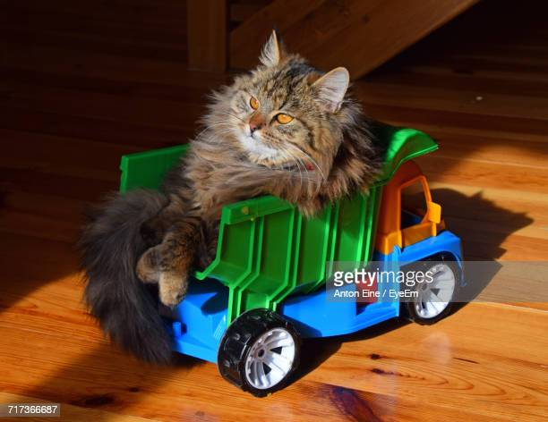 Maine Coon Cat Sitting On Toy Truck At Home